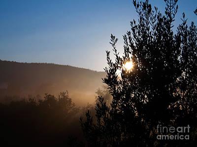 Olea Europaea Photograph - Olive Tree by Tim Holt