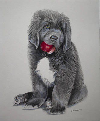Newfoundland Puppy Painting - Oliver's Red Ball by Sharon Nummer