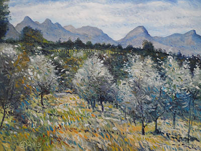 Painting - Olives At Diemersfontein Cape South Africa. by Enver Larney