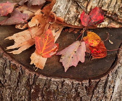 Fallen Leaves Photograph - On The Block by Charles Kozierok