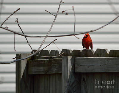 Icons Photograph - On The Fence by Alys Caviness-Gober