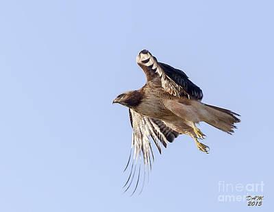 Hawk Photograph - On The Hunt by David Millenheft
