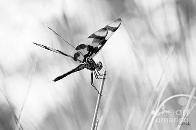 Dragonflies Photograph - On The Launch Pad by Scott Pellegrin
