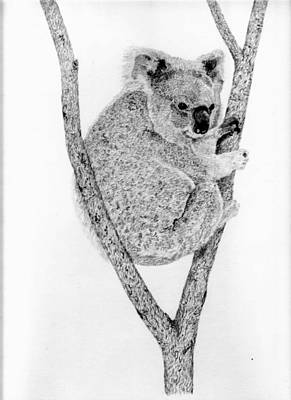 Koala Drawing - On The Watch by Wendy Brunell