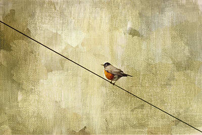 Red Bird Photograph - On The Wire by Rebecca Cozart