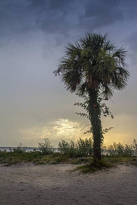 Palmetto Tree Photograph - Once Upon A Rainy Day by Marvin Spates