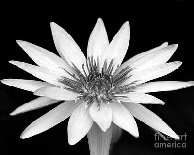 One Black And White Water Lily Print by Sabrina L Ryan