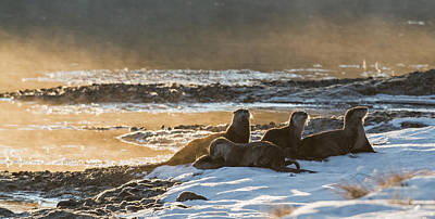 Otter Photograph - One Cold Morning by Sandy Sisti