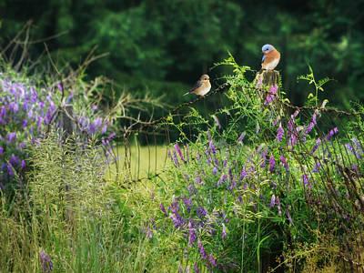 Bluebird Digital Art - One Summer Afternoon by Lori Deiter