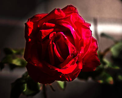 Macro Photograph - One Tough Flower by Tom Gari Gallery-Three-Photography