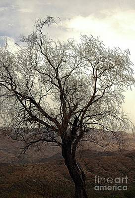 One Tree Print by Kathleen Struckle