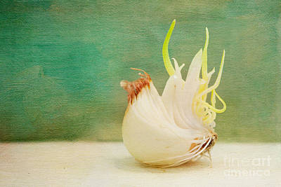 Onion Bird Print by Kay Pickens
