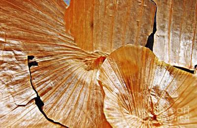 Onion Photograph - Onion Skin Abstract by Sarah Loft