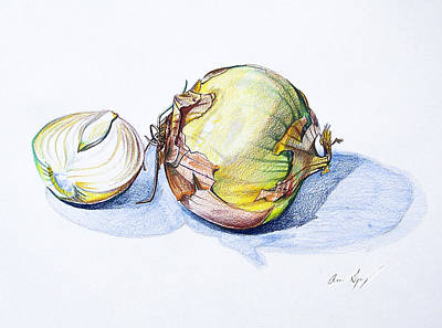 Carrot Drawing - Onions by Aaron Spong