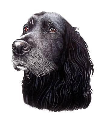 Black Labrador Drawing - Opal by Danielle R T Haney