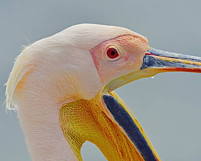 Yellow Beak Photograph - Open For Business by Tony Beck