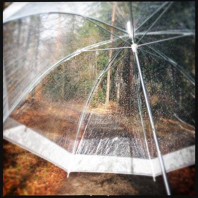 Open Umbrella With Water Drops In The Forest Print by Matthias Hauser