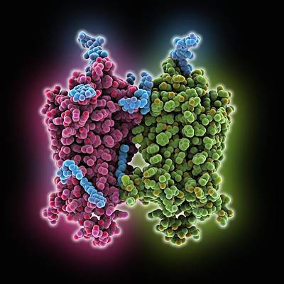 Opsin Molecule Print by Science Photo Library