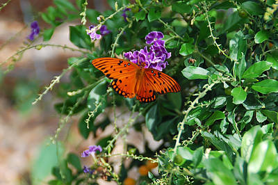 Orange Butterfly Print by Aimee L Maher Photography and Art Visit ALMGallerydotcom