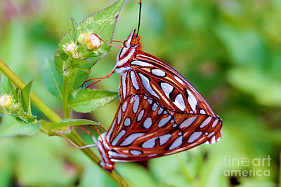 Butterfly Photograph - Orange Butterfly by Michael Frizzell