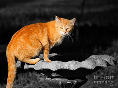 Kitten Photograph - Orange Cat by Jai Johnson