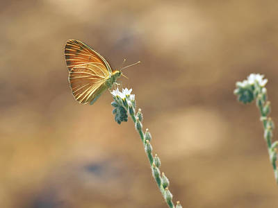 Butterfly Photograph - Orange Day by Meir Ezrachi