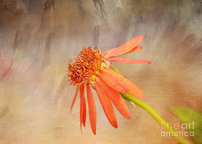 Flower Photograph - Orange Dream By Kerri Farley by Kerri Farley