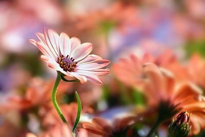 Garden Photograph - Orange Fare by Saami Ansari