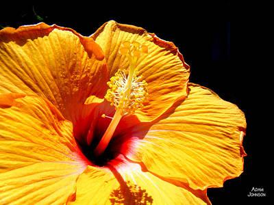 Hibiscus Photograph - Orange Hibiscus by Adam Johnson