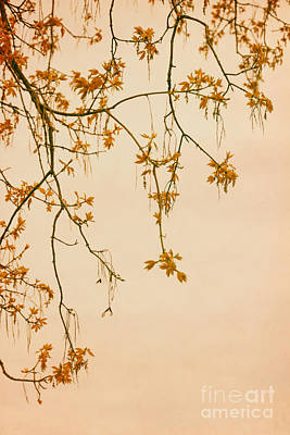 Orange Leaves Original by Margie Hurwich