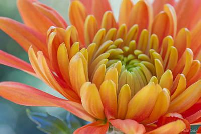 Thanksgiving Art Photograph - Orange Mum Closeup by Heidi Smith