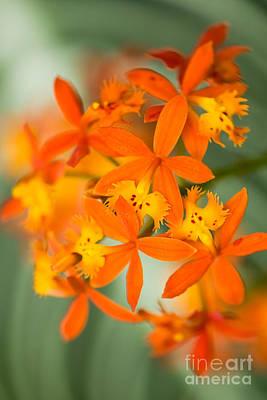 Flowers Photograph - Orange Orchid by Oscar Gutierrez
