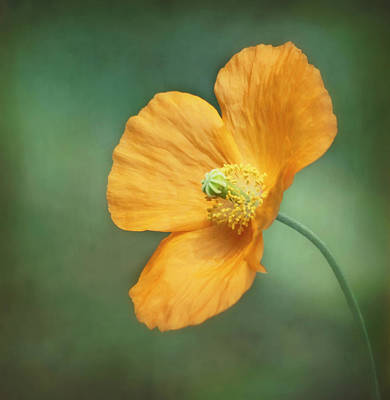 Kim Photograph - Orange Pop by Kim Hojnacki