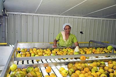 Belize Photograph - Orange Processing Factory by Jim West