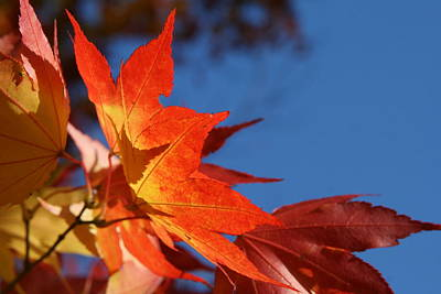 Photograph - Orange Sunshine by Neal Eslinger