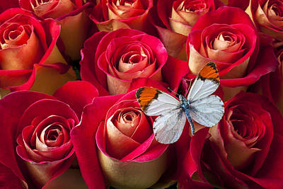 Orange Tip Butterfly Print by Garry Gay