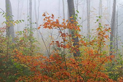 Western Ma Photograph - Orange You Glad by Juergen Roth