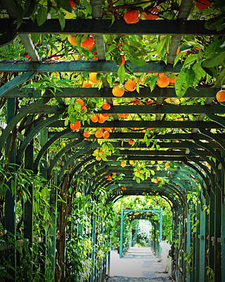 Lake Como Photograph - Oranges And Lemons On A Green Trellis by Brooke Ryan