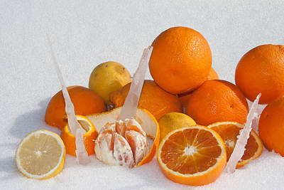 Oranges And Lemons On Snow Print by Bruno Paolo Benedetti