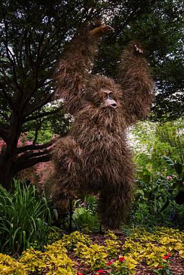 Orangutan Print by Joan Carroll