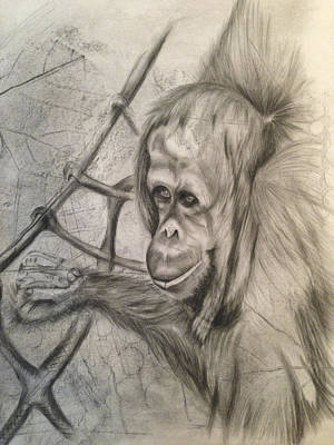 Orangutan Drawing - Orangutan On Ropes by Leanne Blackwell