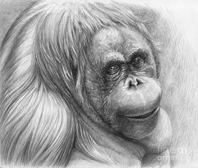 Orangutan Drawing - Orangutan - Pongo Pygmaeus by Svetlana Ledneva-Schukina