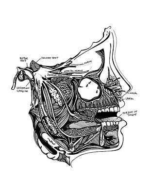 Orbital Nerve Print by Jody Pham