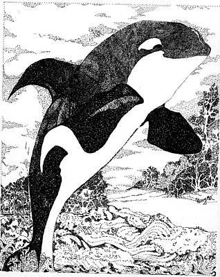 Orca Drawing - Orca by Cher Reissig-Daley