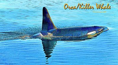 Orca Digital Art - Orca Killer Whale Digital Art by A Gurmankin