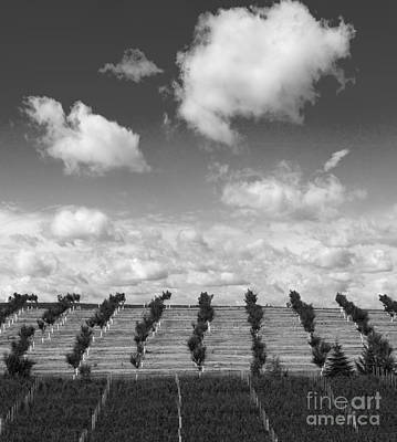 Winery Photograph - Orchard And Vineyard by Twenty Two North Photography