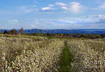 Orchard Country Spring Print by Mike  Dawson