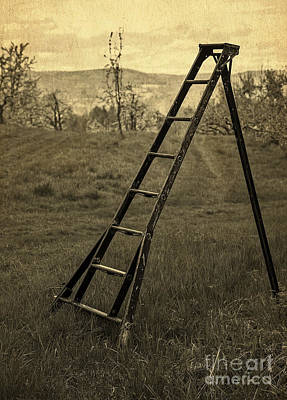 Orchard Ladder Print by Edward Fielding