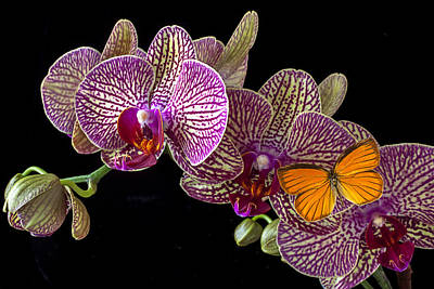 Orchids Photograph - Orchid And Orange Butterfly by Garry Gay