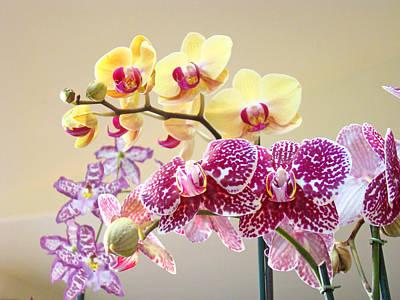 Orchid Art Prints Orchids Flowers Floral Bouquets Print by Baslee Troutman